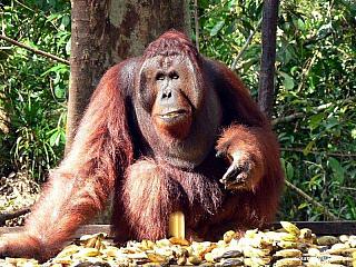 Indonésie, která se rozkládá na několik desítkách různě velkých ostrovů, má úhrnem 1,9 milionu kilometrů čtverečních a přes 230 milionů obyvatel. Jejími sousedy jsou mimo jiné Papua Nová Guinea, Východní Timor a Malajsie, pokud hovoříme o hranicích na souši, přes moře hraničí Indonésie se...
