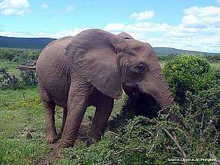 Fotogalerie Jihoafrická republika (Jihoafrická republika)