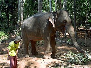 Kudy kam – Ko Chang a Trat (Thajsko)