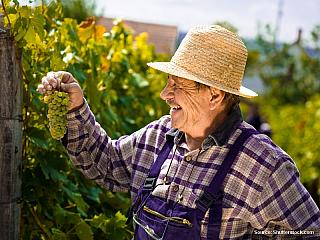Luxusní vína ze zlatých svahů (Francie)