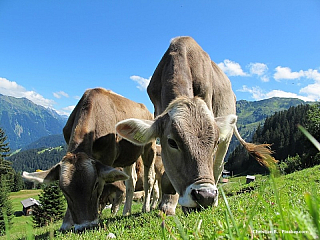 Rakousko - recenze země pod Alpami (Rakousko)