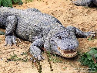 Dolní Rožínka a Krokodýlí park (Česká republika)