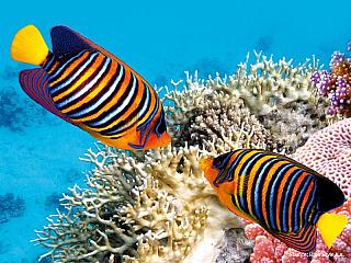 Korálové útesy v Rudém moři (Egypt)