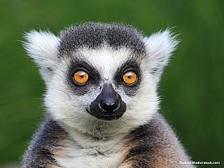 """Klima ostrova Madagaskaru je tropické, ovlivňované východnímipasáty. Nejvícesrážekpřes 3000mmspadne ročně na návětrném východním pobřeží, ve srážkovém stínu na západě a jihozápadě ostrova spadne nejméně 500mm srážek. Poloostrovu Masoala se dokonce říká """"nočník Madagaskaru"""", protože na něm..."""