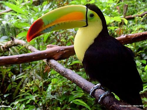 Tropické lesy a vůbec nádherná příroda, ale také spoustu památek na někdejší mayskou kulturu. Belize je relativně malý stát, oproti České republiceje jen čtvrtinový a žije zde asi tři sta tisíc stálých obyvatel. Na stranu druhou, je tu tolik zajímavého, že vám to vlastně ani nepřijde. A...