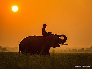 Starobylá kultura Laosupatří pro našince khodně neprobádaným záležitostem. Rozlehlá země vhorách má za sebou ale bohatou historii, jíž bohužel vposledních desetiletích provázely dozvuky vietnamské války. Někdejší slavné království Lan Xang ale přesto stojí za výpravu, nabízí i mnoho...