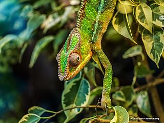 Většina znás zná Madagaskar především díky slavnému (a velmi povedenému!) animovanému filmu. Příběh čtyř zvířat utíkajících ze zoologické zahrady je sice roztomilý, zeměpisné znalosti bychom zněj však bohužel čerpat raději neměli. Madagaskar je ostrov u východních břehů afrického kontinentu,...