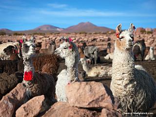 Potosí – Tupiza 19/7/2003 V kopci nad Potosí objevili Španělé kdysi dávno stříbro a rozhodli se ho vlastnit. Město se tak stalo na dlouhou dobu nejbohatším místem Jižní Ameriky a pupkem španělského koloniálního světa. Potom všechno stříbro vytěžili a s luxusem byl konec. Zbyl jim tu ale ještě...
