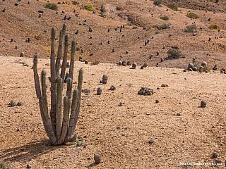 San Pedro de Atacama – Calama – Santiago de Chile – Caldera 26/7/2003  Jelikož mě včera v pozdních večerních hodinách popadla touha po volnosti, probudil jsem se dnes ráno na poušti za městem a zdáli na mě shlížel šestitisícový vulkán Licancabur. Podobně jako nedávno v Tupize, obloha hrozila...