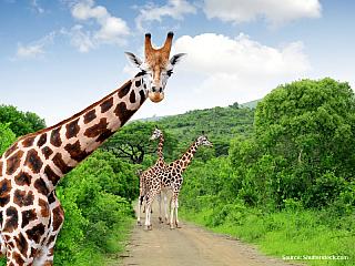 Jihoafrická republika, Lesotho, Svazijsko, Mosambik, Zimbabwe, Zambie (26.9. – 22.10.2006) 15. 10. 2006, neděle Spalo se nám dobře, ovšem opět pro změnu bylo chladněji. Dnes jsme vstávali už ve 3:45, protože jediným programem byla návštěva perly Jihoafrické republiky, a to Krugerova národního...