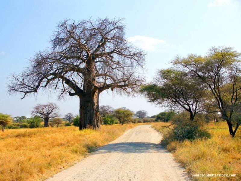 Deník z Jižní Afriky (část 28 / 32)