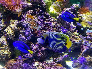 Akvárium Sea Life v Lido di Jesolo (Itálie)