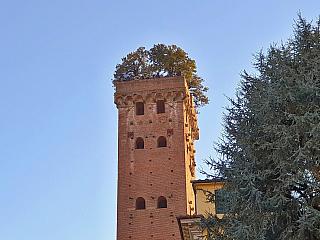 Torre Guinigi má připomínat starou slávu města Lucca (Itálie)