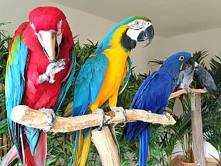 Vítejte v Království papoušků (Česká republika)