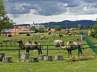 Broumovská farma Wenet je ideální místo pro milovníky zvířat (Česká republika)