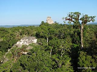 15/12/05 – Tikal Z postele nas tahaj heverem, ale jit se musi. Cekaji nas krasne pyramidy v Tikalu. Pruvodce nas nahani do minibusu a jeste jedem pro dalsi lidi. Jsou to pekni loudove a ja zacinam byt nastvanej, ze nestihnem vychod slunce nad pyramidama. Jedeme asi hodinu nez dorazime do Tikalu....