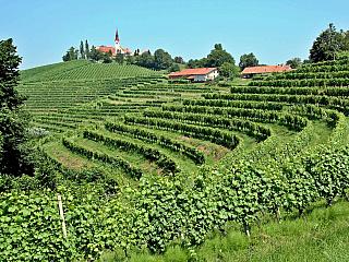 Jeruzalémská vinařská oblast (Slovinsko)