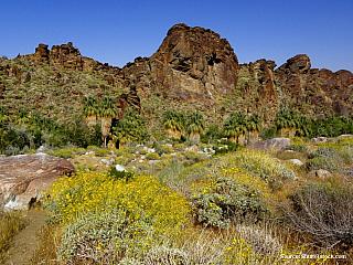 Americká poušť II. - část 2. PALM CANYON (Spojené státy americké)