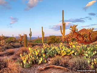 Americká poušť II. - část 3. HRANICE ARIZONY A MEXIKA (Spojené státy americké)