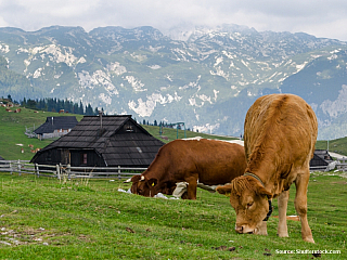 Slovinsko - Fakta o zemi (Slovinsko)