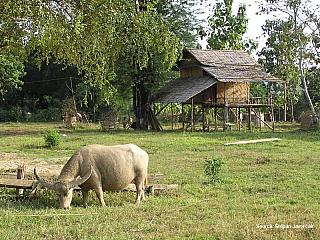 Štěpa ze světa 23 – cesta do Chiang Mai (hranice Laos – Thajsko) (Laos)