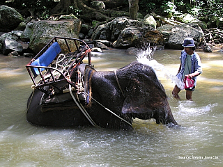 Štěpa ze světa 24 - Ostrov Samui (Thajsko); 5.12.2004 (Thajsko)